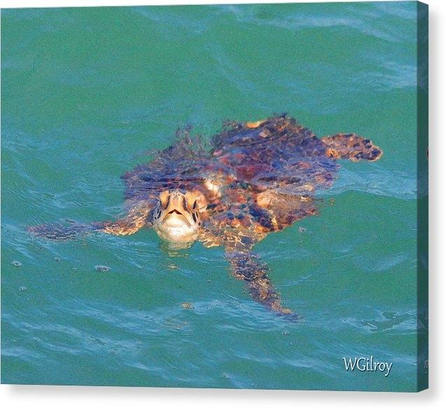 W Gilroy - Sea Turtle / Cocoa Beach Print