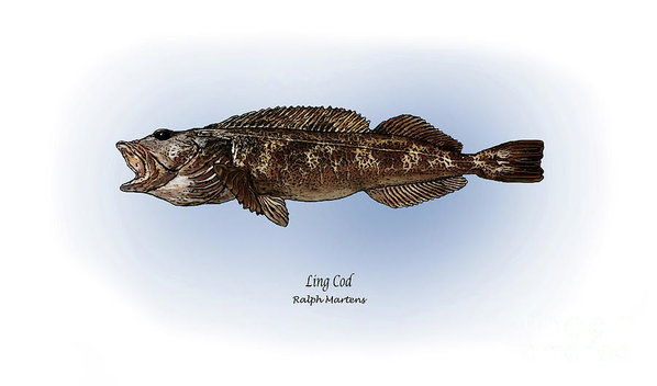 Ralph Martens - Ling Cod Print