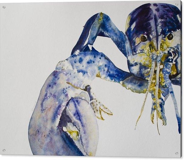 Kellie Chasse - Maine Blue Lobster Print