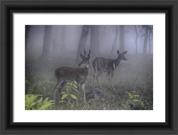 Mike Yeatts - Fog of the wild  Print