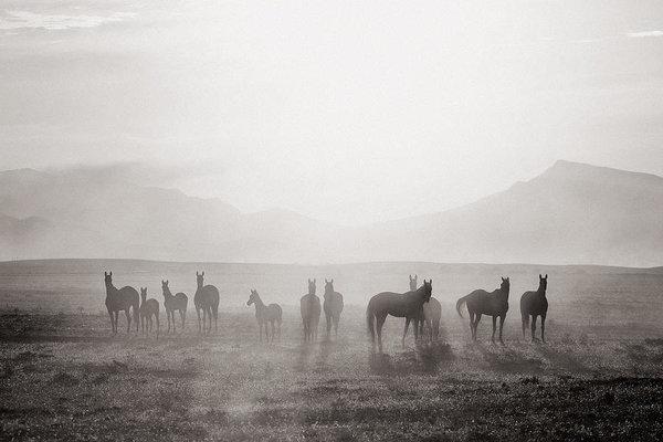 Artur Baboev - Herd #3 Print