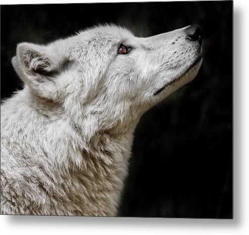 Wes and Dotty Weber - White Wolf D5668 Print