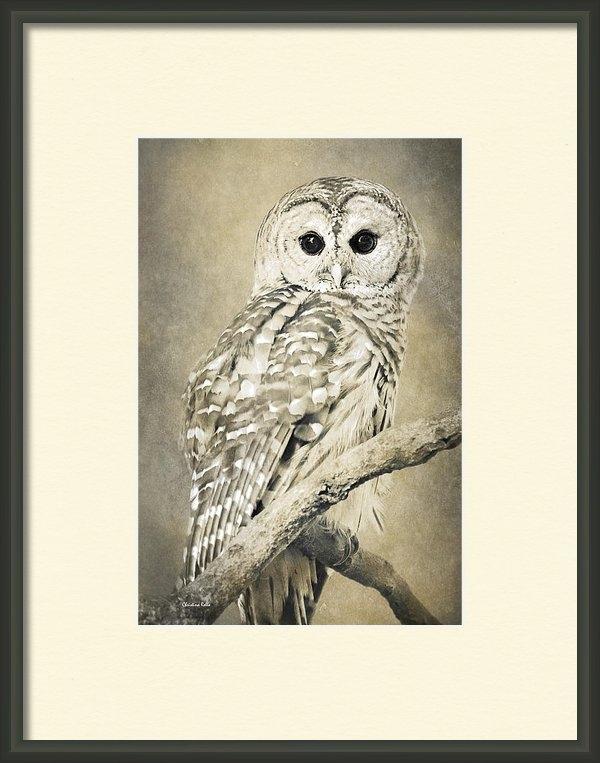 Christina Rollo - Sepia Owl Print