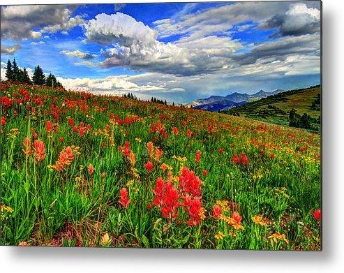 Scott Mahon - The Art of Wildflowers Print