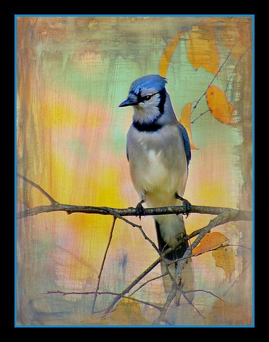 Valerie Stein - The Painted blue Jay in t... Print