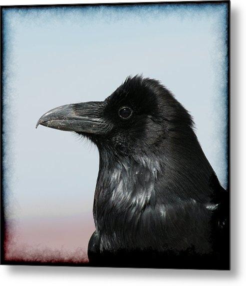 Ernie Echols - Raven Profile Print