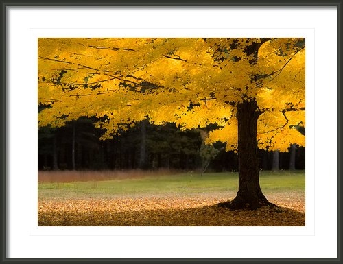 Jeff Folger - Tree canopy glowing in th... Print
