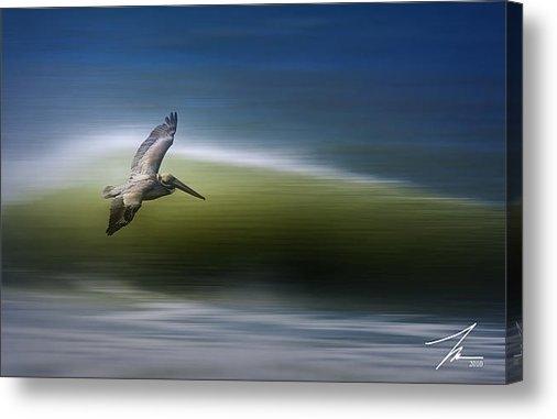 Steve Munch - Surfing Pelican Print