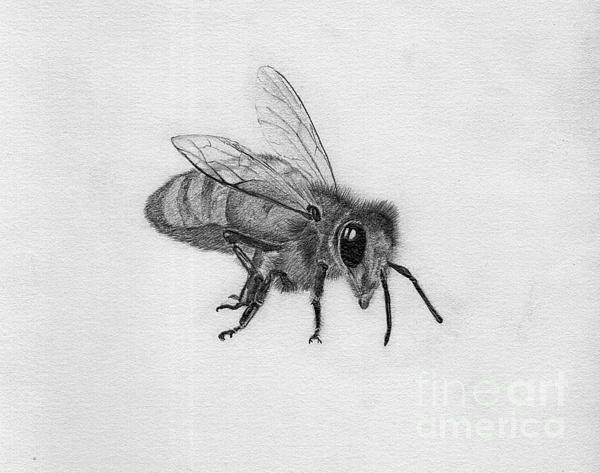 Dan Julien - Bee Pencil Drawing Print