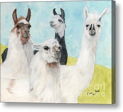 Cathy Peek - Llama Herd Camelid Farm R... Print