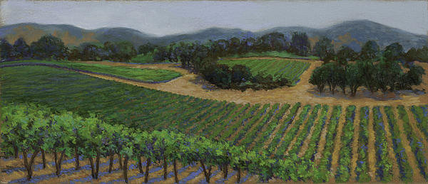 Dena Cornett - Napa Vineyard Print