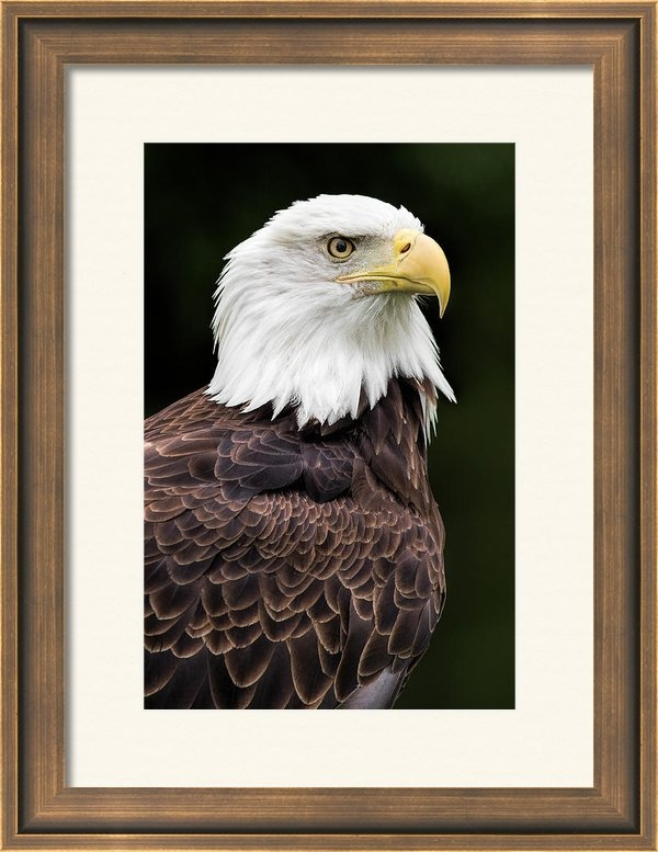 Dale Kincaid - With Dignity Print