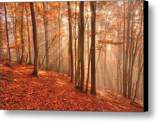 Milan Gonda - Foggy Forest Print