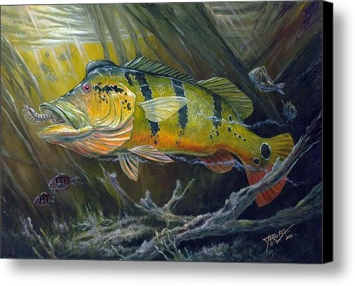 Terry  Fox - The Great Peacock Bass Print