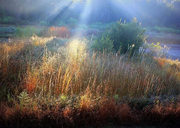 Carol Groenen - Morning Light on the Mars... Print