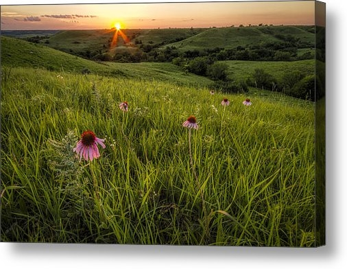 Scott Bean - Out In The Flint Hills Print