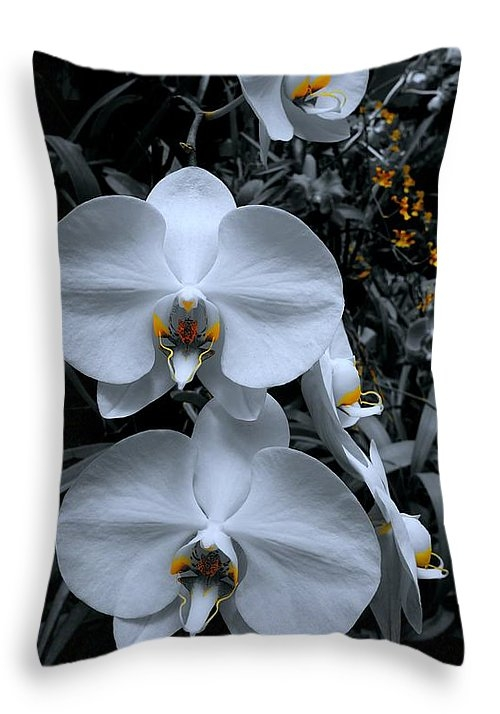 Tim G Ross - Sri Lanka Orchids Print