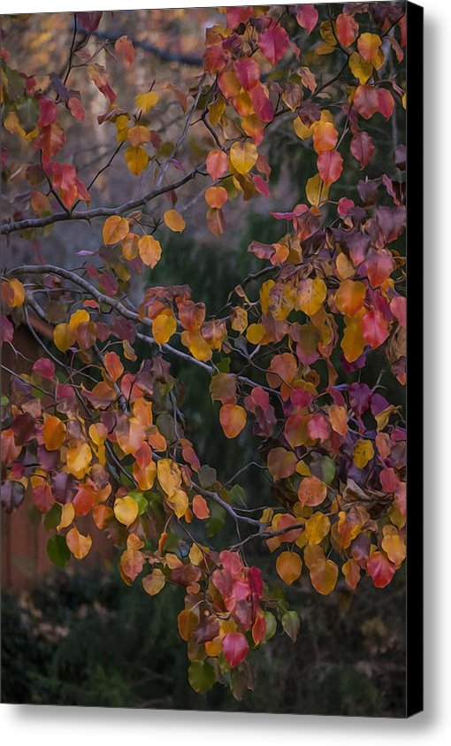 Mike Parrish - Autumn Pear Leaves  Print
