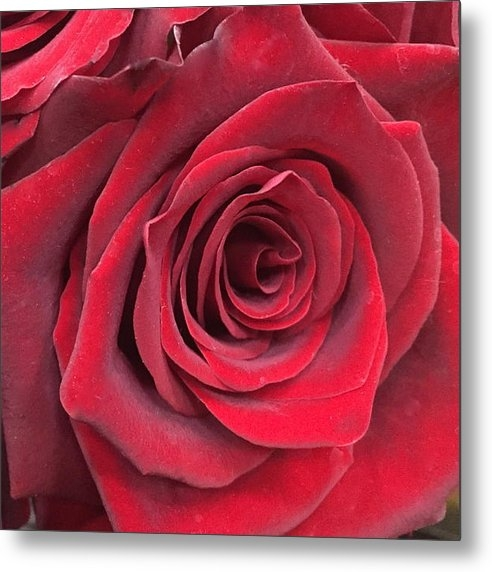 Judy  LaMar - Red Velvet Rose Print