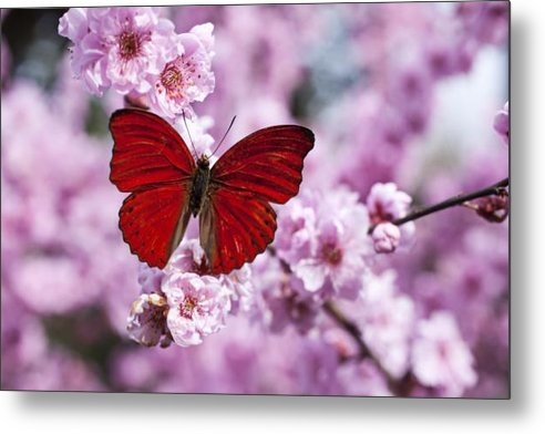 Garry Gay - Red butterfly on plum  bl... Print