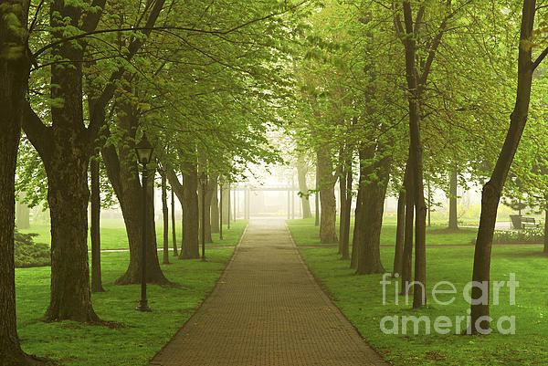 Elena Elisseeva - Foggy spring park Print