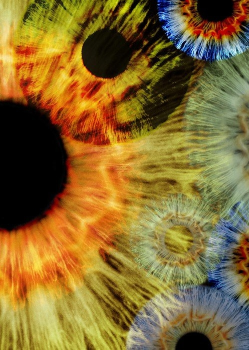 Science Photo Library - Human eyes Print
