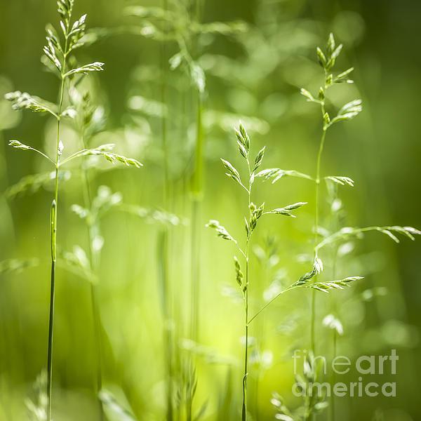 Elena Elisseeva - June green grass flowerin... Print