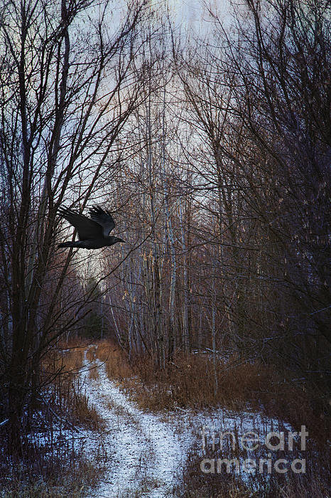 Sandra Cunningham - Black bird flying by in f... Print