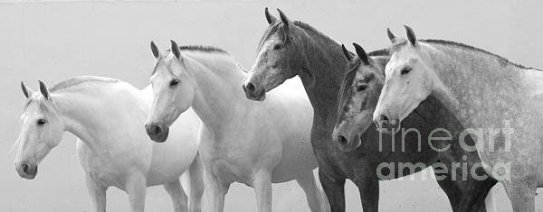 Carol Walker - Five Spanish Mares Print