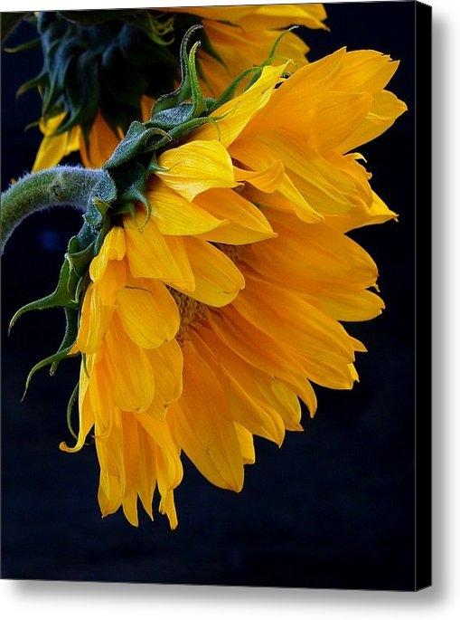Brenda Pressnall - You Are My Sunshine Print