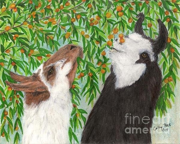 Cathy Peek - Llamas Eating Apricots Ca... Print