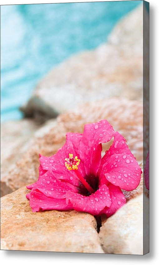 Amanda And Christopher Elwell - Hibiscus Flower Print