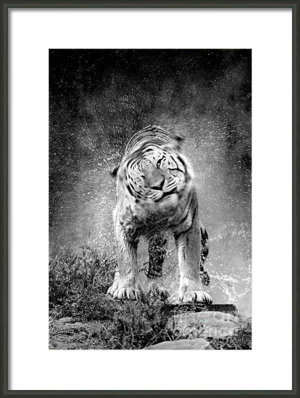 Rich Killion - Tiger 3 Print