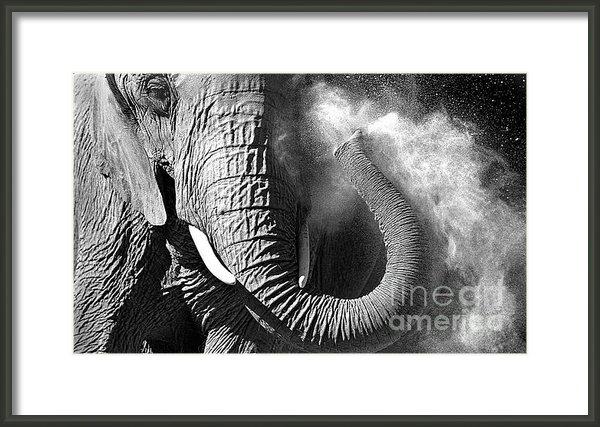 Rich Killion - Elephant 1 Print