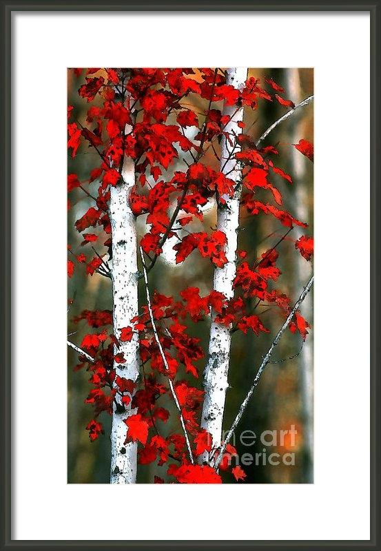 Rich Killion - Red Leaves 2 Print