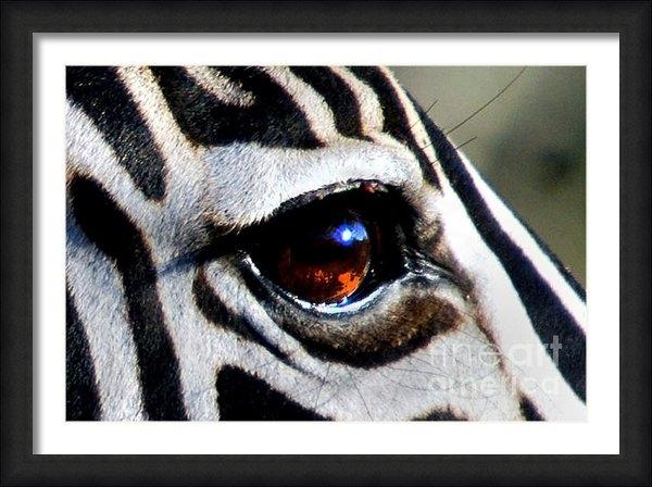 Alexandra Jordankova - Sunset Reflected in Zebra... Print