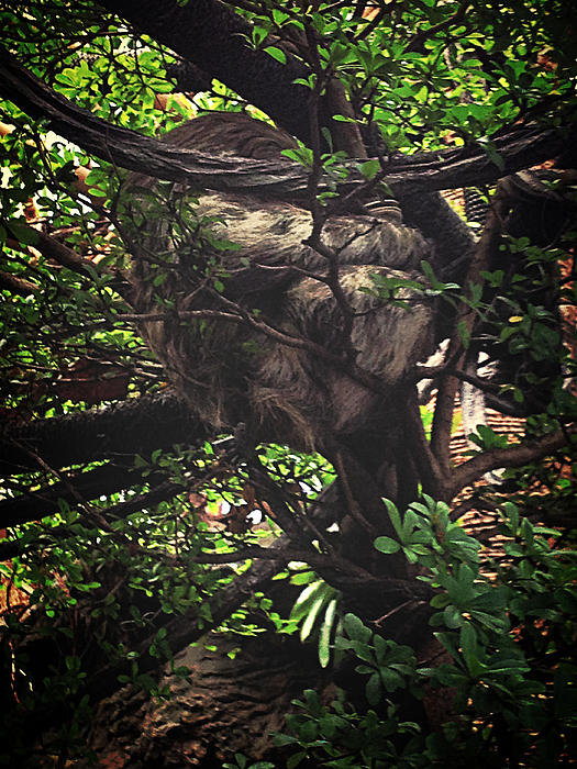 Devin Britton - Sloth in a Tree Print