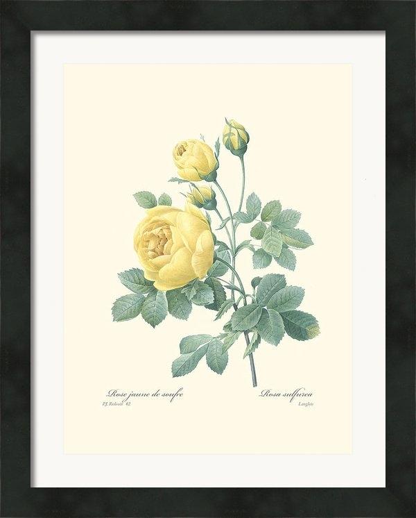 Gary Grayson - Yellow Rose Print
