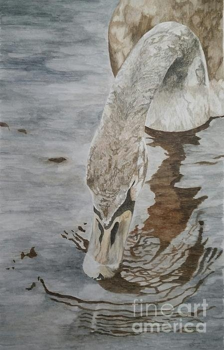 Laura Banister - Chocolate Swan Print
