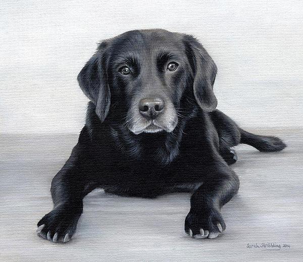 Sarah Stribbling - Black Labrador Print