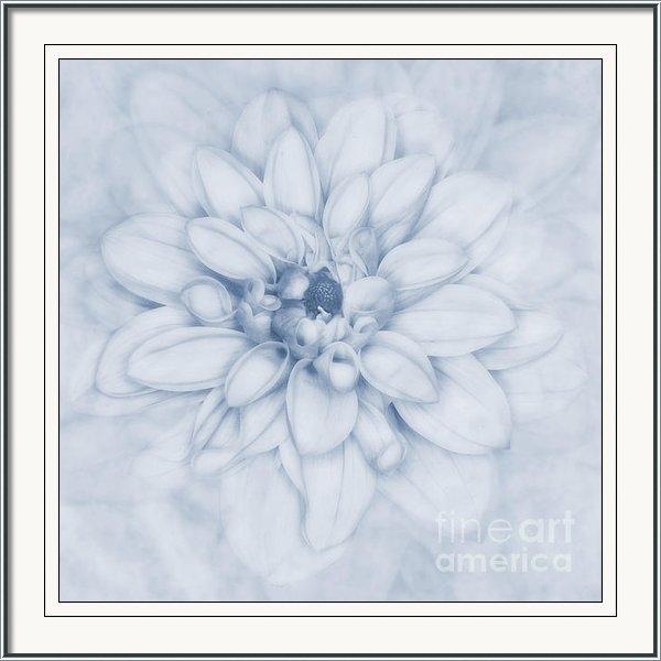 John Edwards - Floral Layers Cyanotype Print