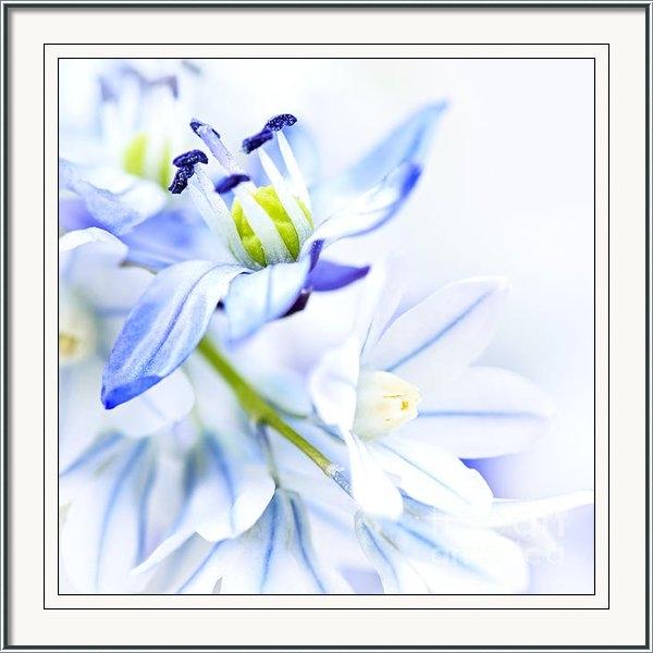 Elena Elisseeva - First spring flowers Print