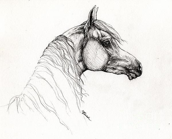 Angel  Tarantella - Arabian Horse Drawing 11 Print