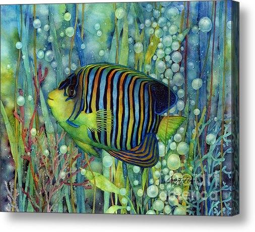 Hailey E Herrera - Royal Angelfish Print