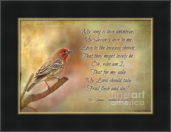 Debbie Portwood - Male House Finch with Hym... Print