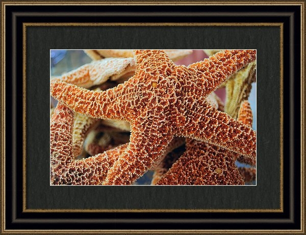 Roger Reeves  and Terrie Heslop - Study of a Starfish Print