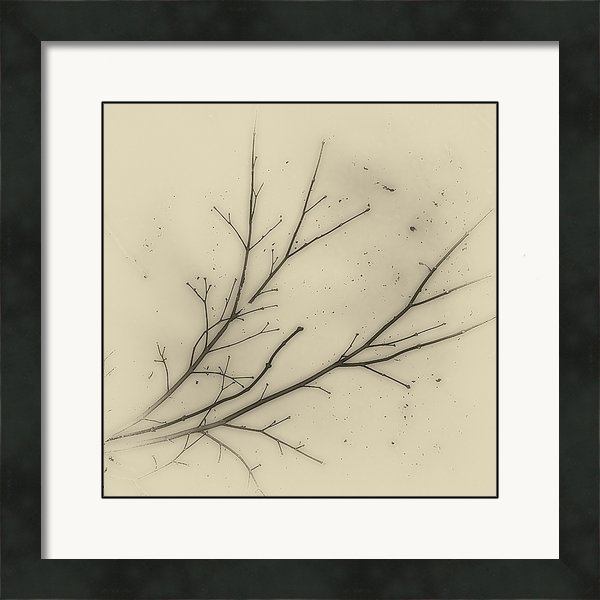 Andrew Wohl - Branch in Snow Print