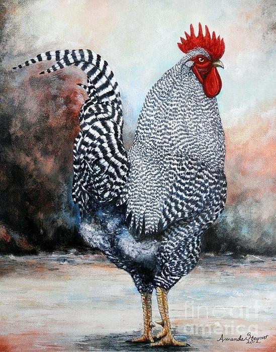 Amanda  Stewart - Barred Rock rooster Print