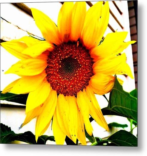 Naomi Burgess - Sunflower Blossom  Print