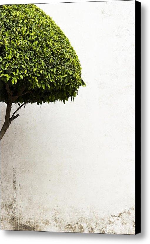 Prakash Ghai - Hypnotic Tree Print